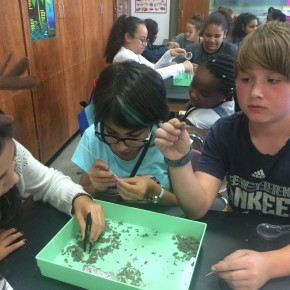 Check Out What's Happening in 6th grade Science!
